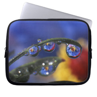 USA, Oregon, Portland, Close-up of ladybird Laptop Sleeve