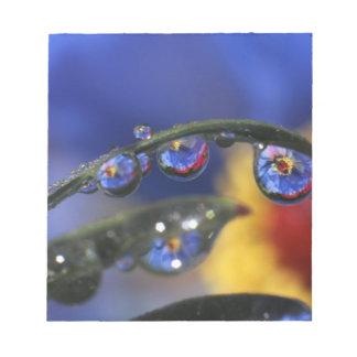 USA, Oregon, Portland, Close-up of ladybird Notepad