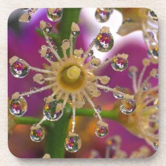 USA, Oregon, Portland. Cosmos flowers reflect in Coaster