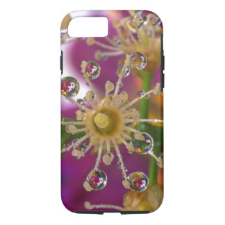 USA, Oregon, Portland. Cosmos flowers reflect in iPhone 8/7 Case