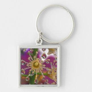 USA, Oregon, Portland. Cosmos flowers reflect in Key Chains