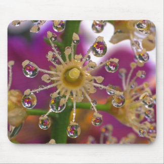 USA, Oregon, Portland. Cosmos flowers reflect in Mouse Mat