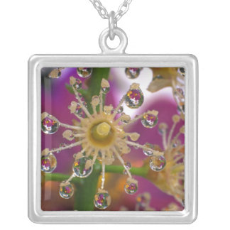 USA, Oregon, Portland. Cosmos flowers reflect in Silver Plated Necklace