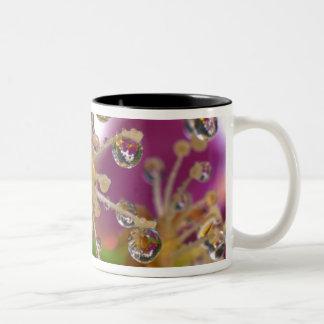 USA, Oregon, Portland. Cosmos flowers reflect in Two-Tone Coffee Mug