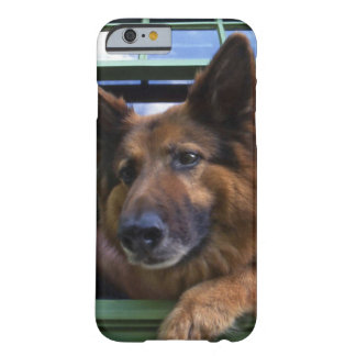 USA, Oregon, Portland. Griff the long-hair Barely There iPhone 6 Case