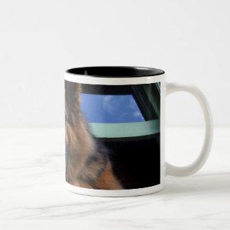 USA, Oregon, Portland. Griff the long-hair Two-Tone Coffee Mug