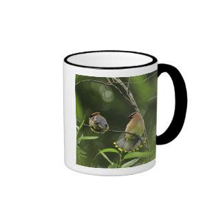 USA, Oregon, Portland. Male cedar waxwing Ringer Coffee Mug