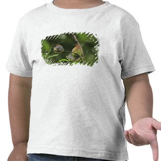USA, Oregon, Portland. Male cedar waxwing T Shirts