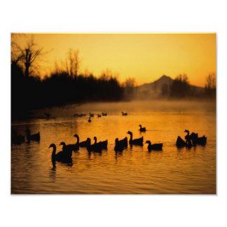 USA, Oregon, Portland. Waterfowl in Columbia Photographic Print