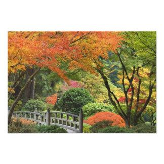 USA, Oregon, Portland. Wooden bridge and maple Photo Print
