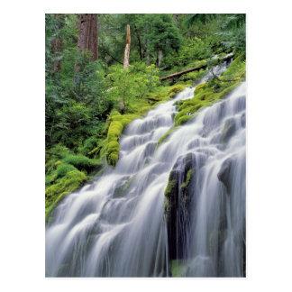 USA, Oregon, Proxy Falls. Proxy Falls rushes Postcard
