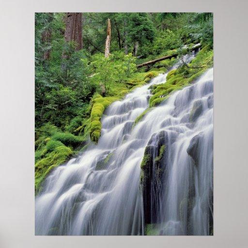 USA, Oregon, Proxy Falls. Proxy Falls rushes Print