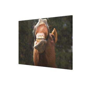 USA, Oregon, Seneca, Ponderosa Ranch. A horse Canvas Print
