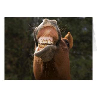 USA, Oregon, Seneca, Ponderosa Ranch. A horse Card