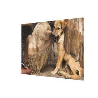 USA, Oregon, Seneca, Ponderosa Ranch. A puppy Stretched Canvas Prints