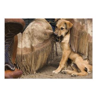 USA, Oregon, Seneca, Ponderosa Ranch. A puppy Photo