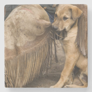 USA, Oregon, Seneca, Ponderosa Ranch. A puppy Stone Coaster