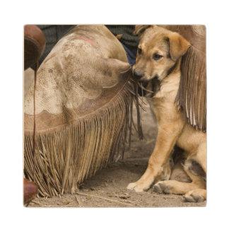 USA, Oregon, Seneca, Ponderosa Ranch. A puppy Wood Coaster