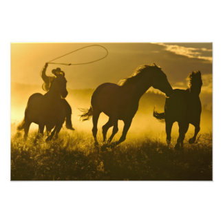 USA, Oregon, Seneca, Ponderosa Ranch. Photo