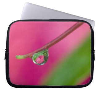 USA, Oregon, Shore Acres Gardens, Water droplet Laptop Sleeves