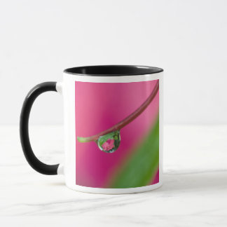 USA, Oregon, Shore Acres Gardens, Water droplet Mug
