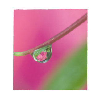 USA, Oregon, Shore Acres Gardens, Water droplet Notepad