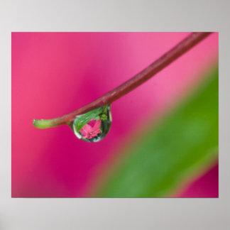USA, Oregon, Shore Acres Gardens, Water droplet Poster