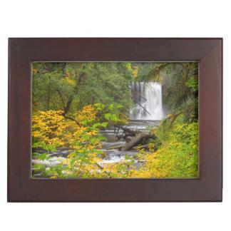 USA, Oregon, Silver Falls State Park 2 Keepsake Box