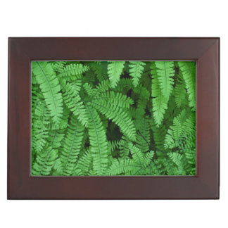 USA, Oregon, Silverton. Maidenhair Ferns Keepsake Box