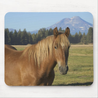 USA, Oregon, Sisters, view of Three Sisters, 2 Mouse Mat