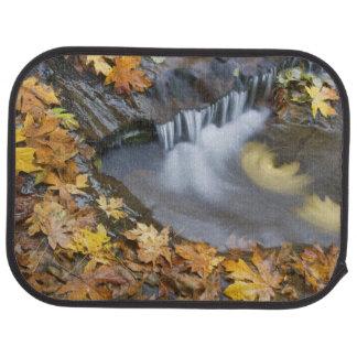 USA, Oregon, Sweet Creek. Fallen maple leaves Car Mat