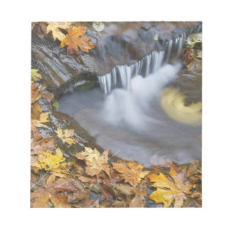 USA, Oregon, Sweet Creek. Fallen maple leaves Notepad