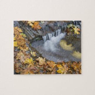 USA, Oregon, Sweet Creek. Fallen maple leaves Puzzle