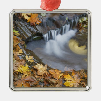 USA, Oregon, Sweet Creek. Fallen maple leaves Silver-Colored Square Decoration