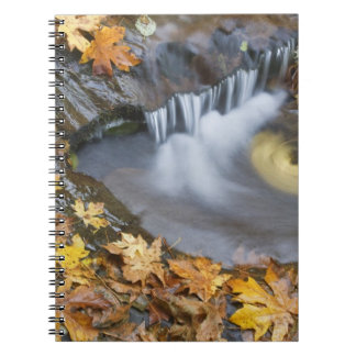 USA, Oregon, Sweet Creek. Fallen maple leaves Spiral Notebook
