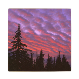 USA, Oregon, Three Sisters Wilderness, Vivid Wood Coaster