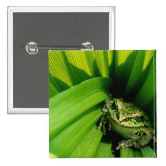 USA, Oregon, Treefrog in False Hellebore 15 Cm Square Badge