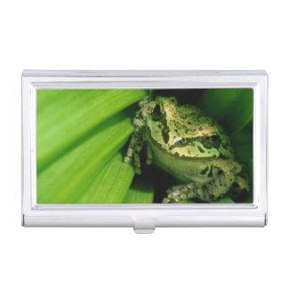 USA, Oregon, Treefrog in False Hellebore Business Card Case