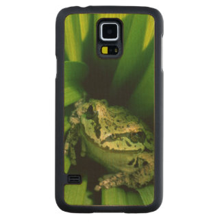 USA, Oregon, Treefrog in False Hellebore Carved Maple Galaxy S5 Case