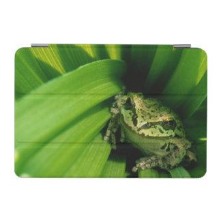 USA, Oregon, Treefrog in False Hellebore iPad Mini Cover