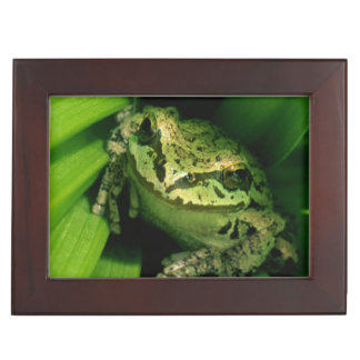 USA, Oregon, Treefrog in False Hellebore Keepsake Box