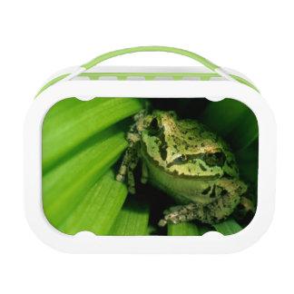 USA, Oregon, Treefrog in False Hellebore Lunch Box