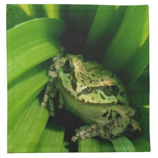 USA, Oregon, Treefrog in False Hellebore Napkin