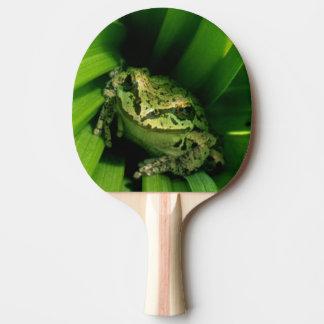 USA, Oregon, Treefrog in False Hellebore Ping Pong Paddle