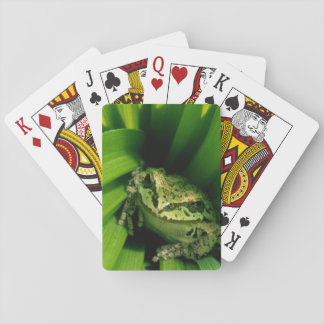 USA, Oregon, Treefrog in False Hellebore Playing Cards