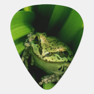 USA, Oregon, Treefrog in False Hellebore Plectrum