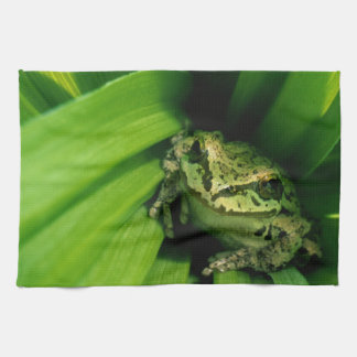 USA, Oregon, Treefrog in False Hellebore Tea Towel