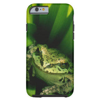 USA, Oregon, Treefrog in False Hellebore Tough iPhone 6 Case