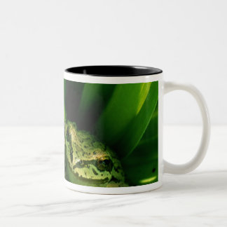 USA, Oregon, Treefrog in False Hellebore Two-Tone Coffee Mug