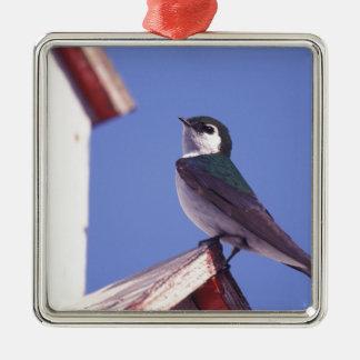 USA, Oregon. Violet-Green Swallow Tachycineta Christmas Ornament